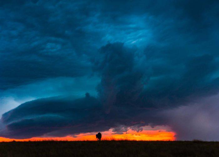 Looming Storm {Baby buffalo}
