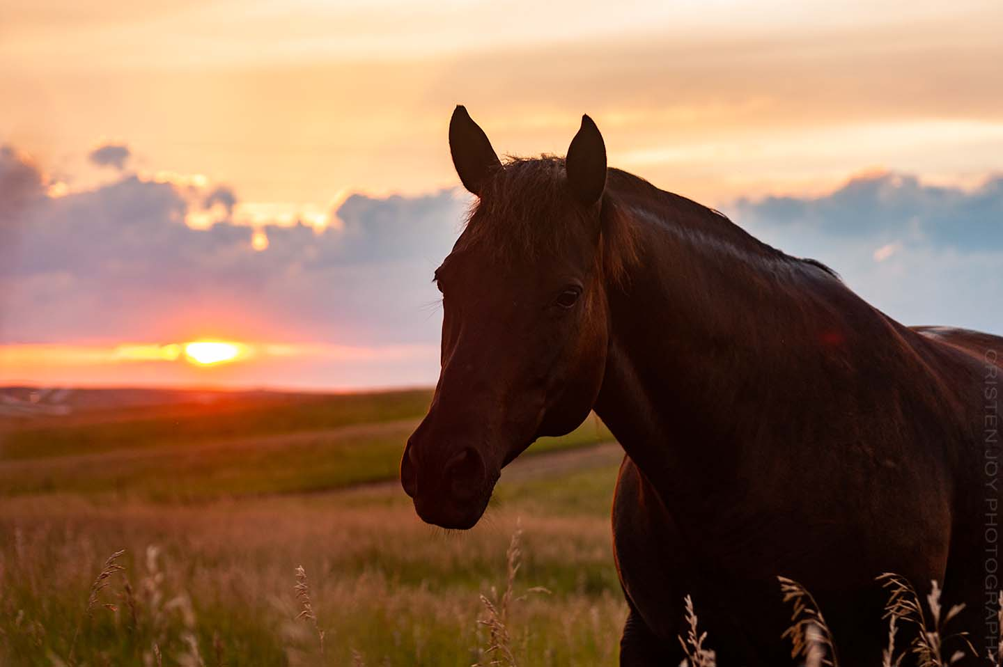 Sunset on the Prairie {Sky & Horses}
