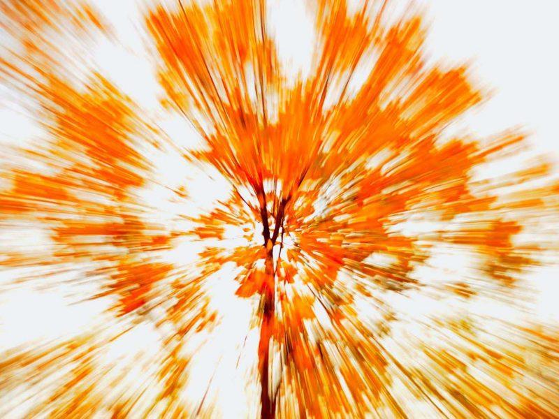 Abstract Leaves Custom Print