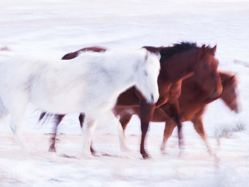 In Motion 5×7 Matted Print