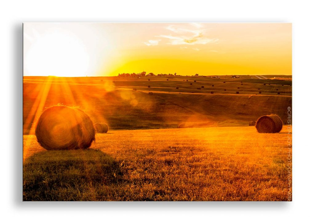 Looking into the late evening sun as it sets, spilling rays of sunshine across a rolling hay field. The tiny town of Okaton, SD can be seen in the distance.