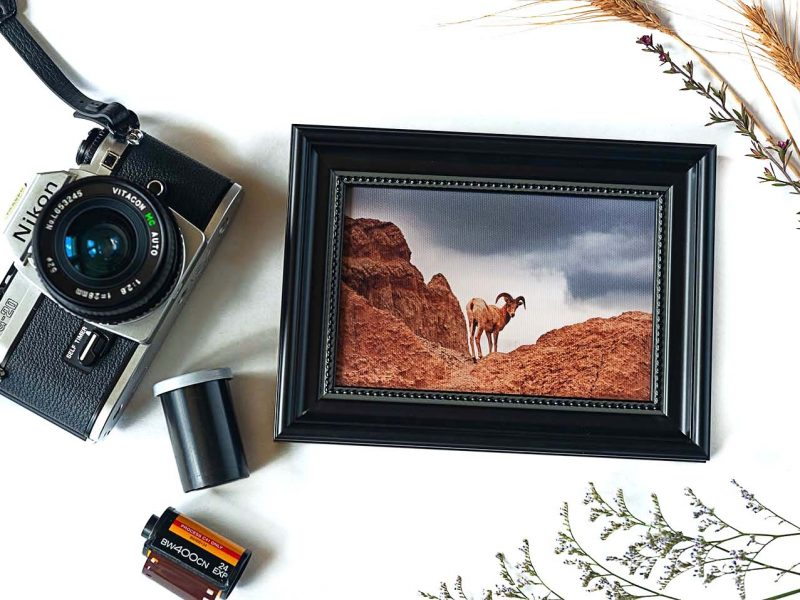 Catch Me if You Can! Framed Mini Canvas Print