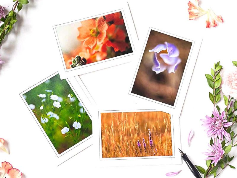 Details of the Prairie Notecard Collection