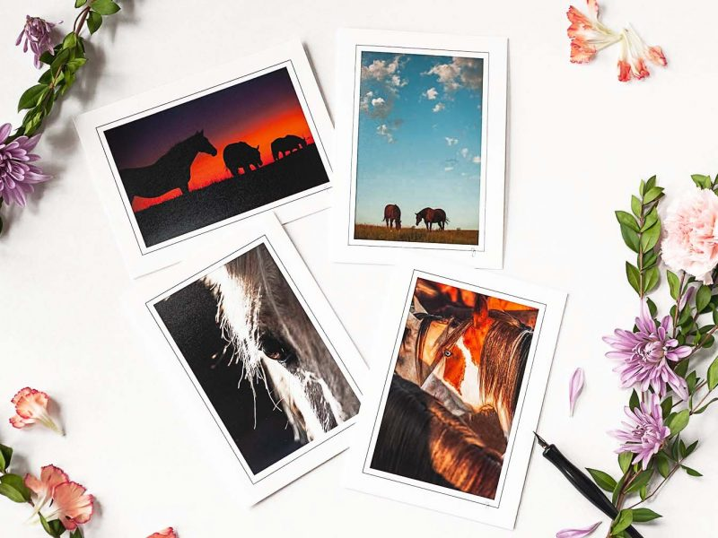 Horse of Mine! Notecard Collection
