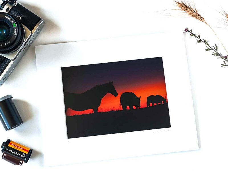 Into the Sunset 5×7 Matted Print