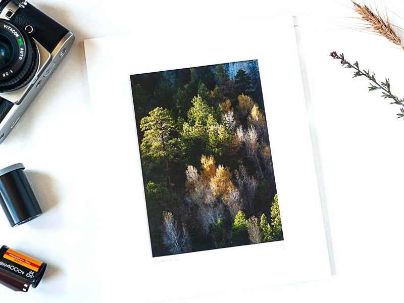 Light & Shadow 5×7 Matted Print