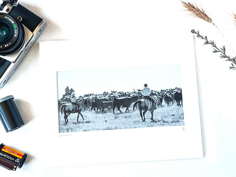 Roundup 4×8 Matted Print