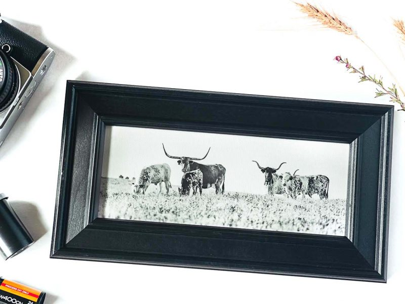 The Longhorns Framed Mini Canvas Print