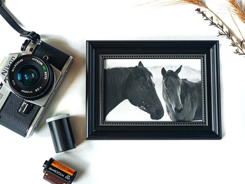 The Mares Framed Mini Canvas Print
