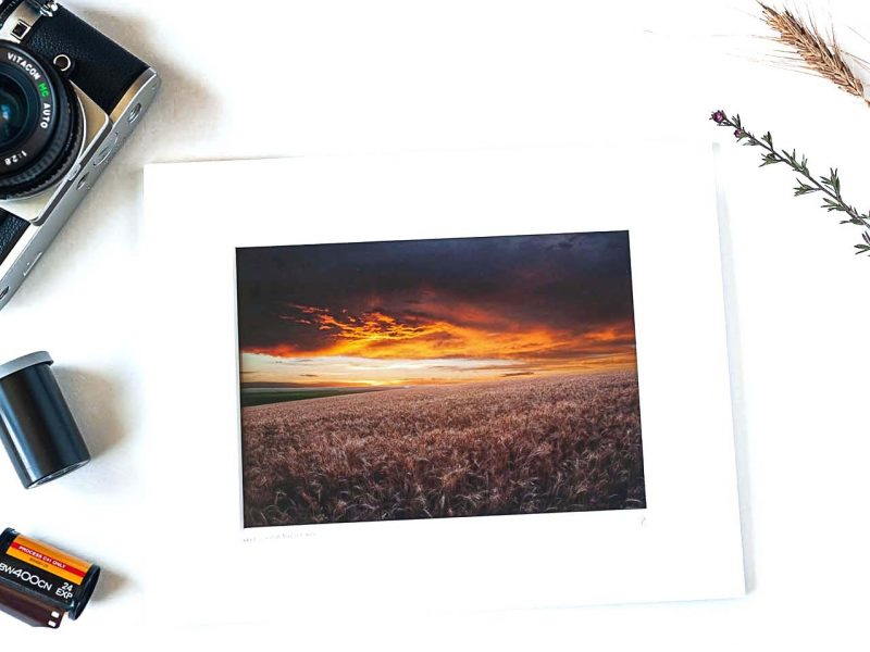 Wheat Field at Sunset 5×7 Matted Print