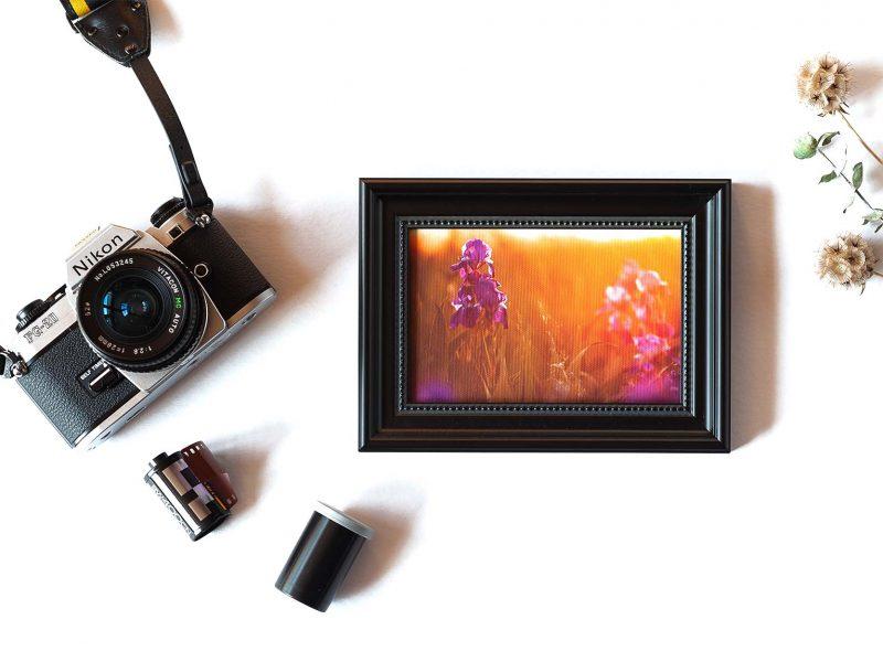 Light in the Garden Framed Mini Canvas Print