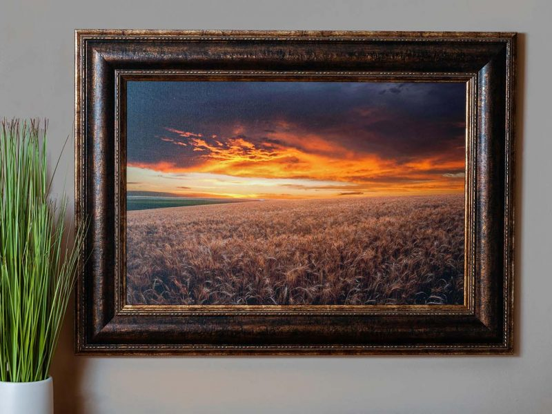 Wheat Field at Sunset 16×24 Framed Giclee Canvas