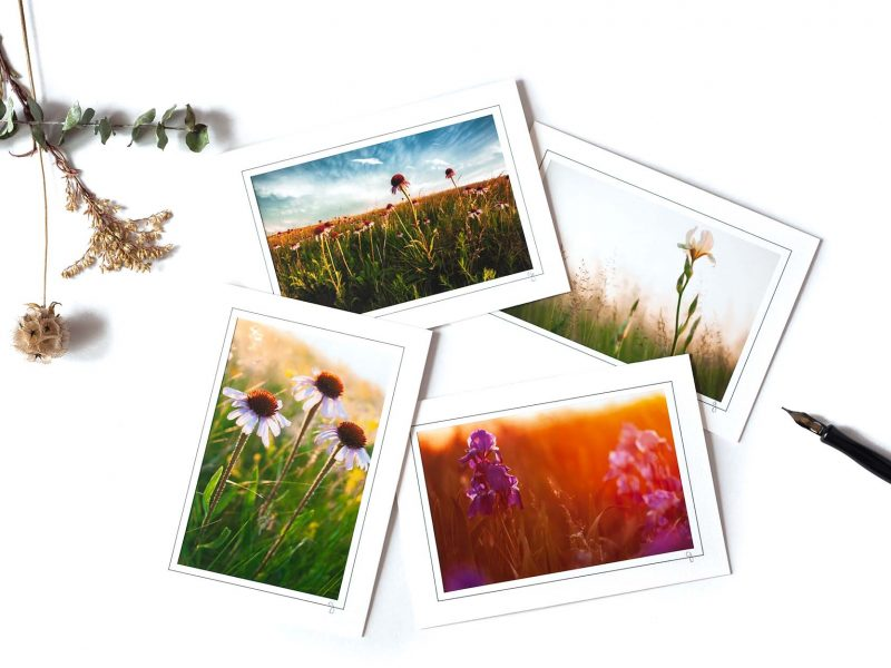 Jewels of the Prairie Notecard Collection