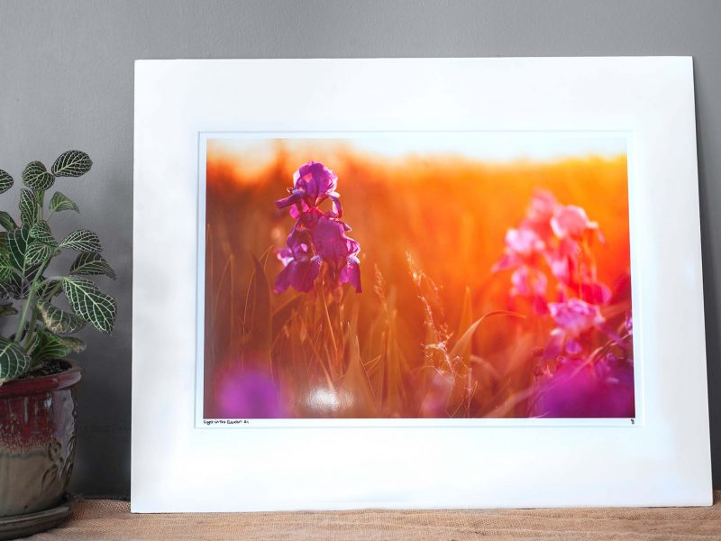 Light in the Garden 10×15 Matted Print