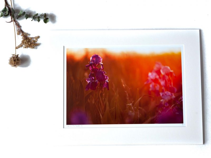 Light in the Garden 8×12 Matted Print