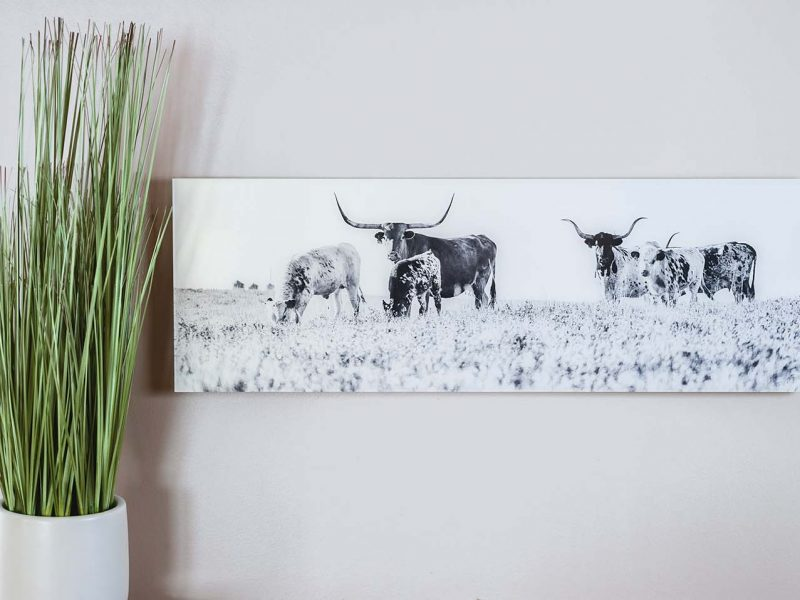 Longhorn 10×24 Acrylic Glass Print