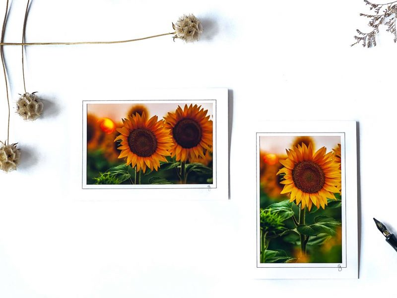 Sunflower Notecard Collection