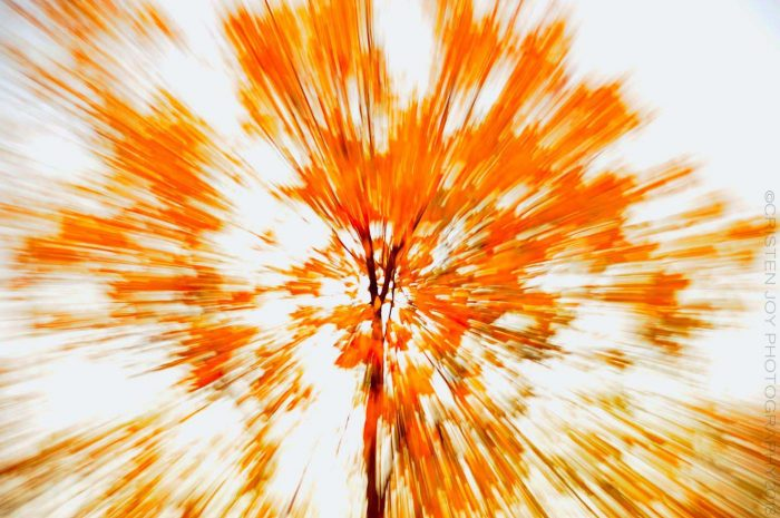 Abstract Leaves © Cristen J. Roghair http://cristenjoyphotography.com