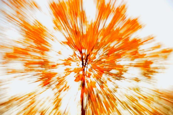 AbstractLeaves