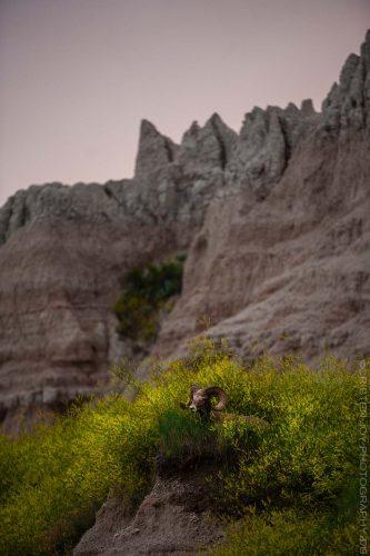 The Watchman © Cristen J. Roghair http://cristenjoyphotography.com