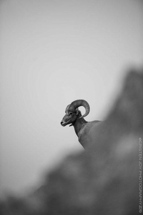 Regal © Cristen J. Roghair http://cristenjoyphotography.com