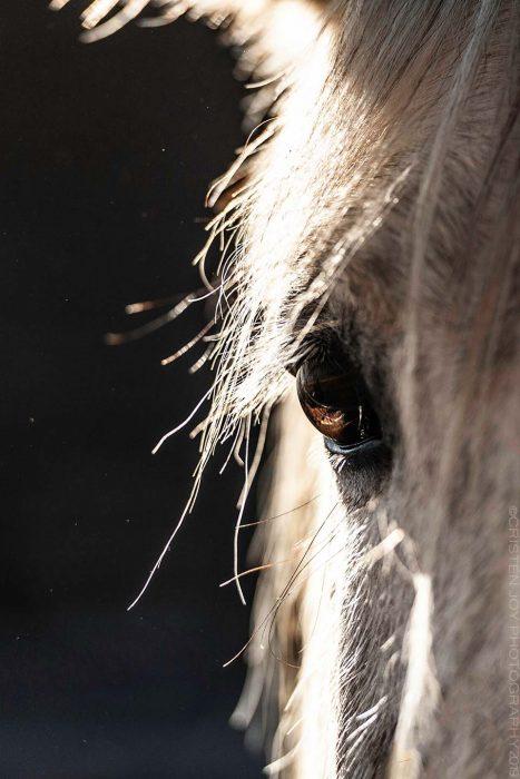 Gentle Gaze © Cristen J. Roghair http://cristenjoyphotography.com