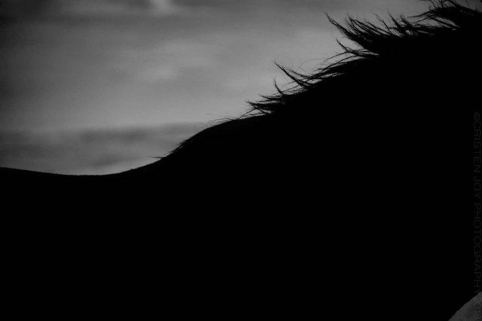 Shadow's Silhouette © Cristen J. Roghair http://cristenjoyphotography.com