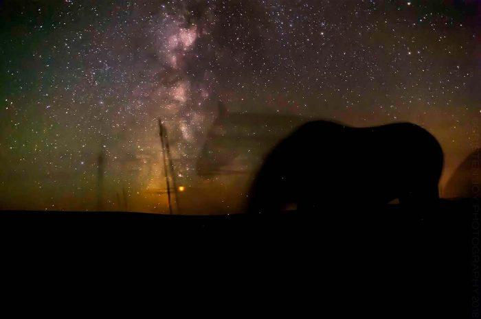 Star Gazing © Cristen J. Roghair http://cristenjoyphotography.com