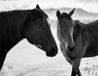The Mares © Cristen J. Roghair http://cristenjoyphotography.com